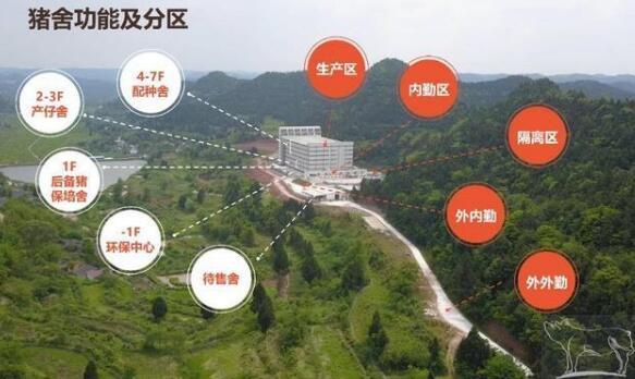 7层楼15亩地一年出栏12.5万头猪,这里的猪儿住楼房、坐电梯