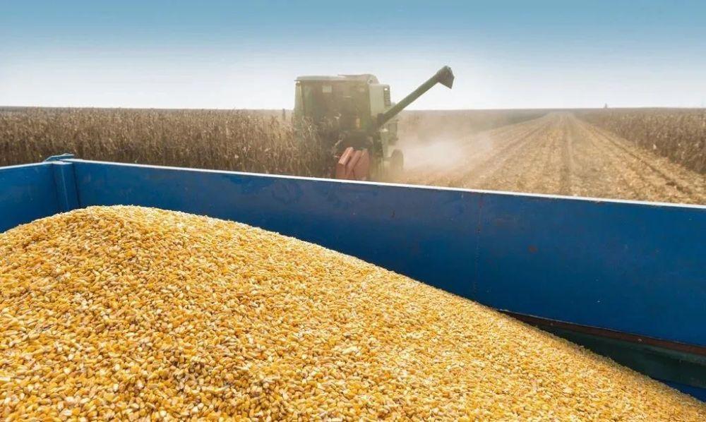 """玉米价格迎来""""大地震"""",到底是啥原因?未来价格如何发展?"""