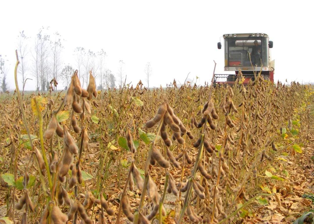 猪价高企,养猪利润可观,饲料需求大幅增加,7月豆粕成交642万吨!