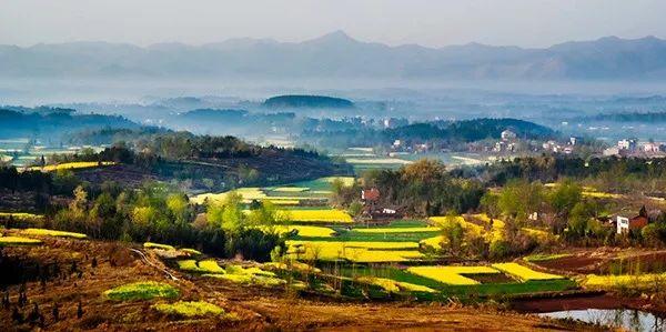 """河南南阳欲占1.5万亩永久基本农田建养猪场,""""米袋子""""""""菜篮子""""如何平衡?"""