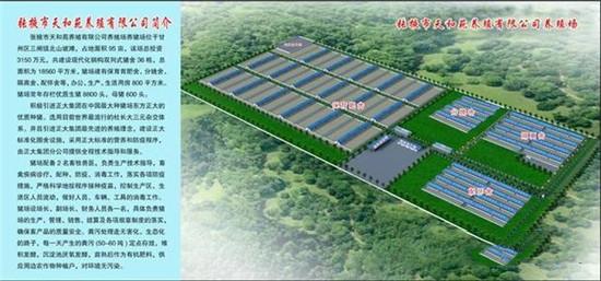 """甘州区三闸镇为切实稳定生猪生产,保障市场供应,""""万头猪场""""拔地而起"""
