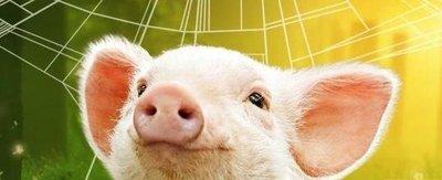 智能化全生态立体式养猪 万头生猪养殖占地不到10亩