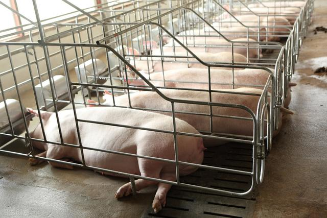 大连农行携手三家机构强强联合共建生猪产业生态圈!