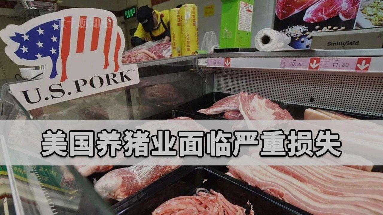 """差太远!国内猪价33.9元/公斤,美国才6.7元,高价背后的""""危机""""该警惕了!"""