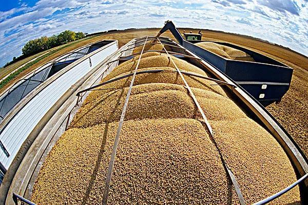 8月31日饲料原料:进口玉米创3年新高!今年美豆进口将达4000万吨!