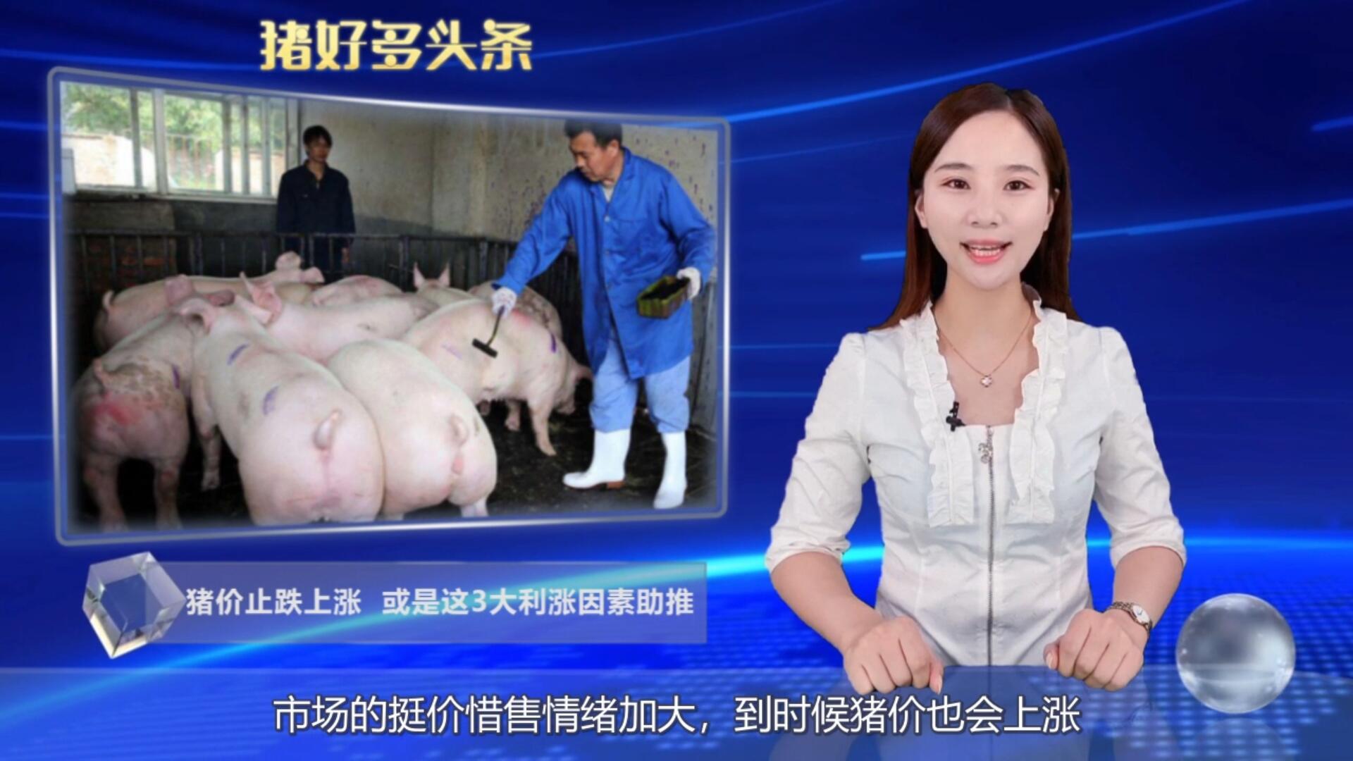 """猪价迎来""""开门红"""",接下来3大利好因素,猪价或涨到19元大关"""