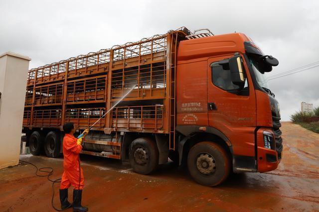 云南:巧家小河塘生猪养殖基地首批扶贫生猪出栏