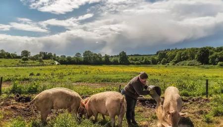 养猪企业占地惹风波!先富不带后富,中小散户养殖场之围谁来破?