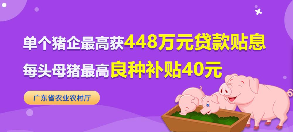 每头母猪最高良种补贴40元,单个猪企最高获448万元贷款贴息!这个地方鼓励养猪再出狠招