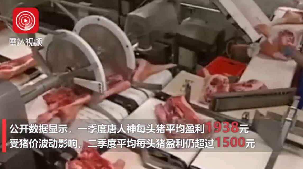 """""""千年一遇""""的猪价?养一头猪可赚近2000元"""