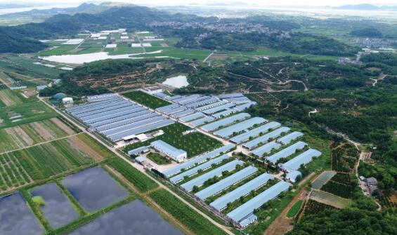 浙江省再出实招加速推进生猪增产保供