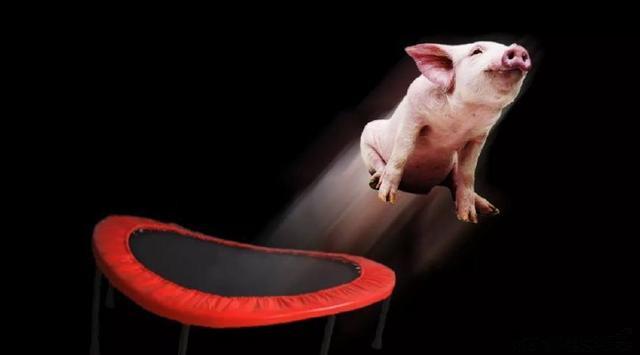 """9月5日20公斤仔猪价格""""大跳水"""",现在补栏还赶得上春节出栏吗?"""