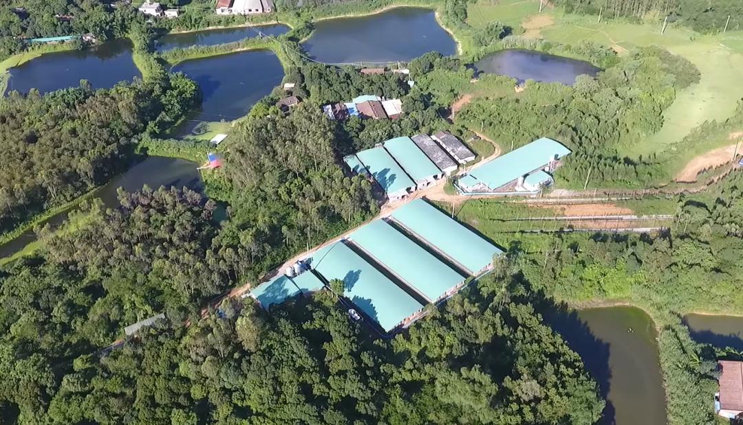 广东珠海:关于推进我市生猪复产及产业转型升级的实施意见