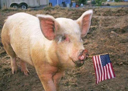 台当局公布美猪进口瘦肉精残存标准,舆论指无法让消费者安心!
