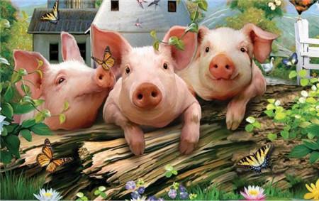 1200头猪洪水冲走,保险赔46.8万!国内近80%猪购买了保险?