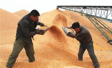 """9月8日饲料原料:""""美莎克""""影响玉米产量,豆粕跟涨动力不足?"""