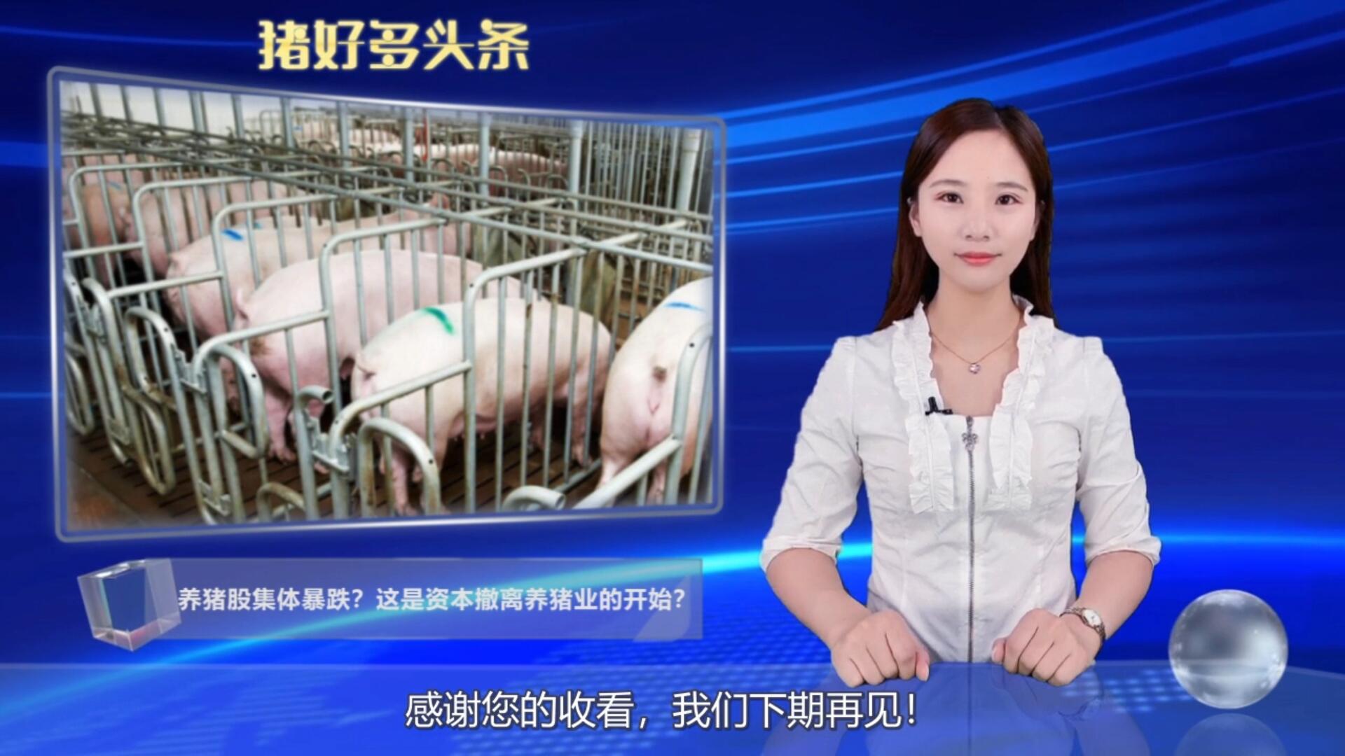 猪肉股重挫,未来生猪行业出现产能过剩,2022年肉价低于10元?