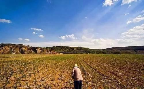 扩大生猪养殖规模不能矫枉过正 耕地保护的红线不能碰