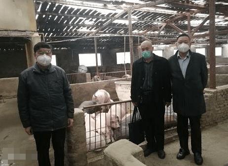 """山东:汶上农行""""生猪贷""""助养殖户安心扩生产"""