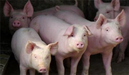 我国出台多项稳产保供政策 引导生猪产能持续恢复