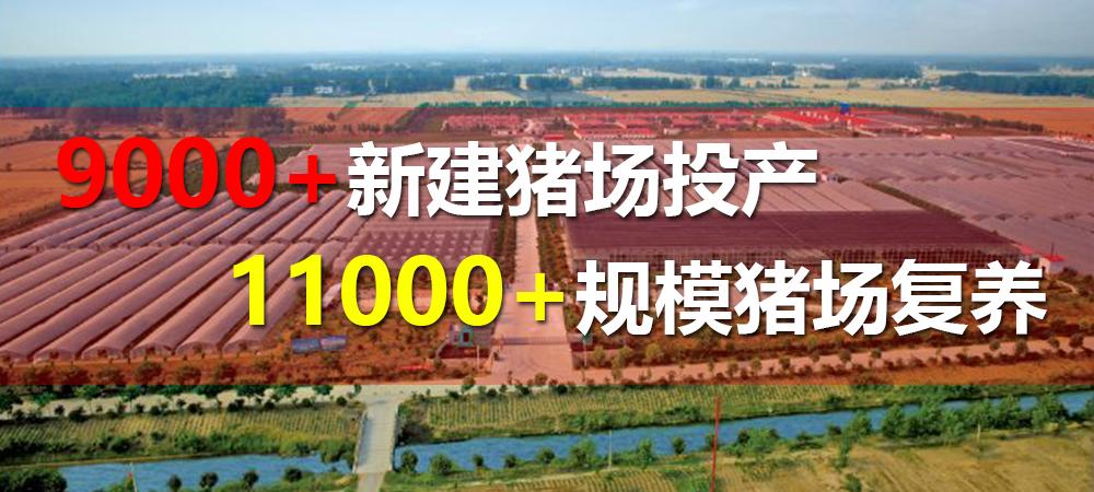 关注:9000+新建猪场投产,11000+规模猪场复养!