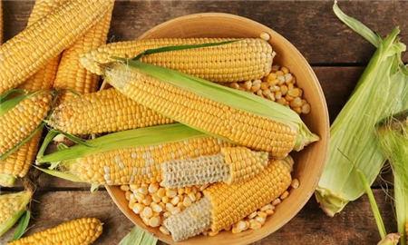 9月15日全国玉米价格行情,玉米市场供不应求,后市上涨常态?