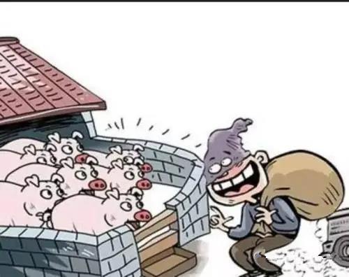 又有偷猪贼!一个月竟偷了100余头猪……