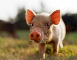 生猪价格较同期上涨37.7%,仔猪价格较前一周下降0.5%