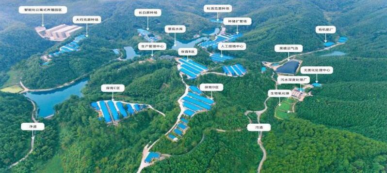 湖南:国企助力产业脱贫 力促生猪稳产保供