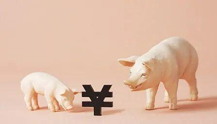 猪肉价格会跌到多少?我们采访了专家和养猪大户