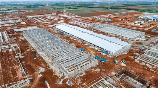 广东:京基智农高州市生猪养殖项目年底实现投产