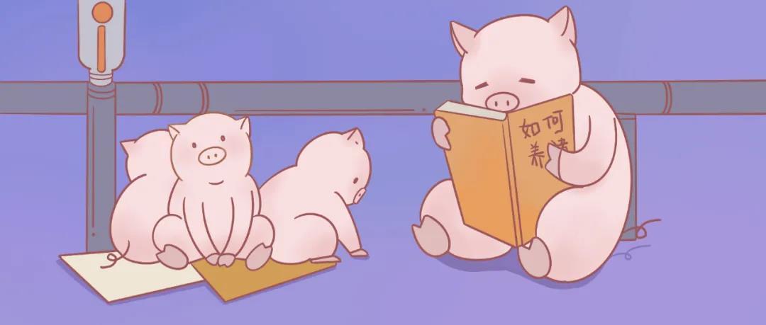 """如今的""""猪倌""""已经变得和以往大不一样,你愿意养猪吗?"""