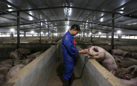 """""""网上传言猪肉价格将回到十元时代"""",养猪户这样说……"""