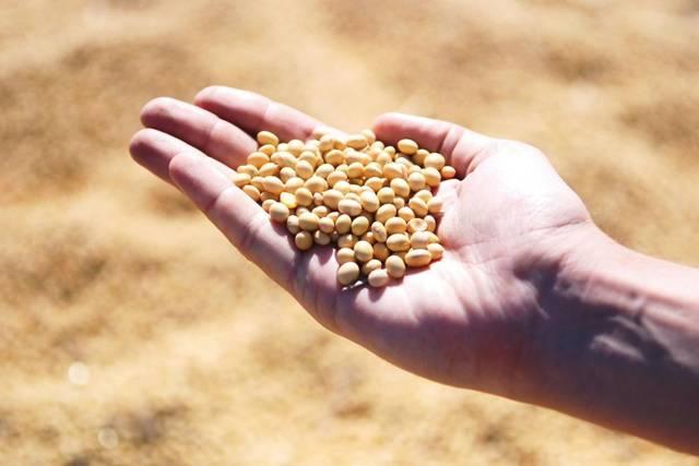 9月20日全国豆粕价格行情,继续偏强运行,局部涨势明显!