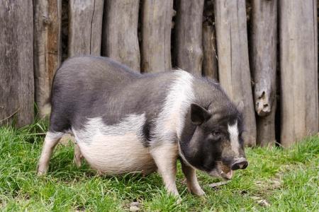回顾中国猪肉进口市场,未来又将如何?