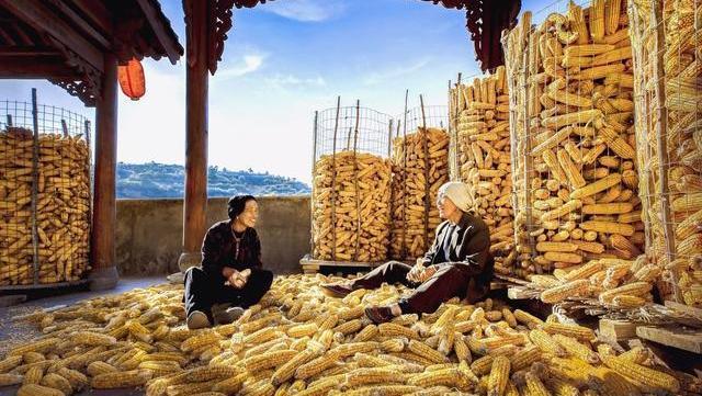 国内玉米供需形势不断好转,玉米价格有所回落