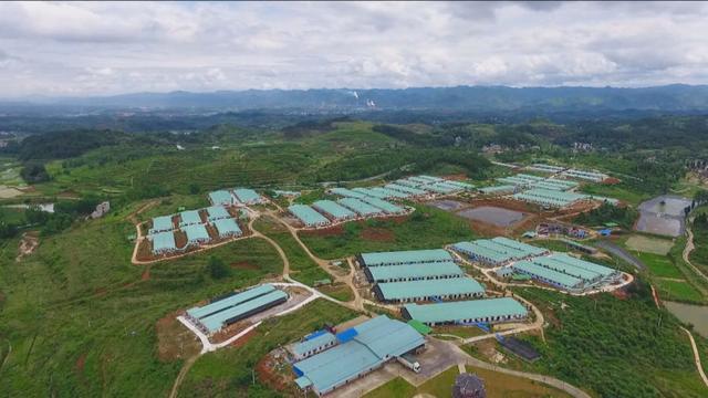 如何推进生猪全产业链发展?贵州铜仁这样探索