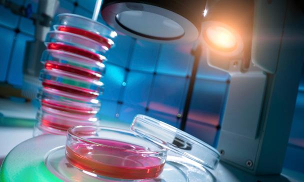 """有望用于临床异种器官移植的""""猪3.0""""诞生"""