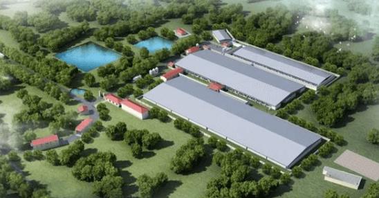 贵州凤冈:1.5亿元生猪养殖项目落地!