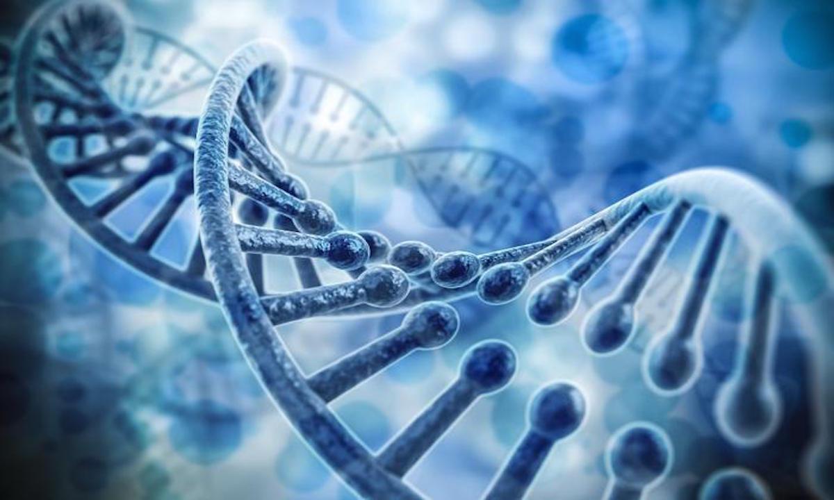 全球首例!基因编辑让猪能抗三种重大疫病