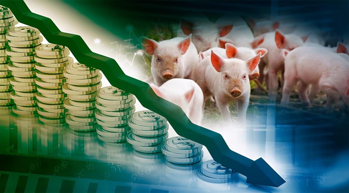 9月23日生猪价格,连跌数日,储备肉又来捣乱,双节猪价要凉?