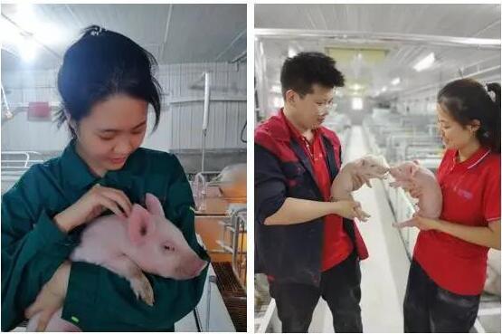 喜报:热烈祝贺大伟嘉股份天镇种猪场一期仔猪顺利降生
