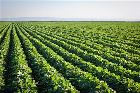 9月25日饲料原料:黑龙江粮食补贴下发,玉米豆粕节后仍有上行空间?