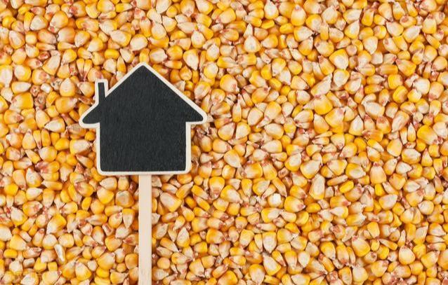 9月26日全国玉米价格行情,新粮入市,玉米行情再次陷入下跌行情!