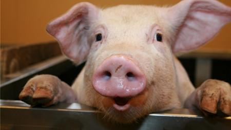 """为恢复产能推出三套""""组合拳,目前全市生猪生产恢复向好"""