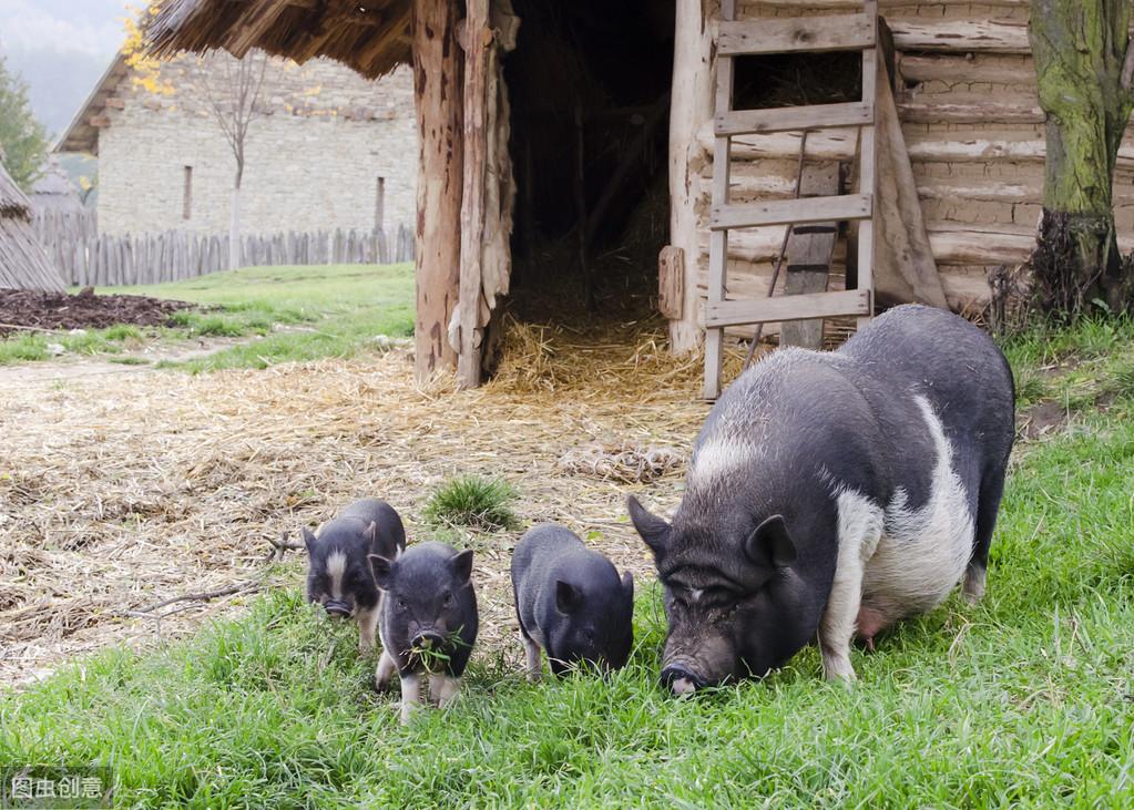 猪场预防疾病时,如何根据需求确定合适的药物和给药方案?