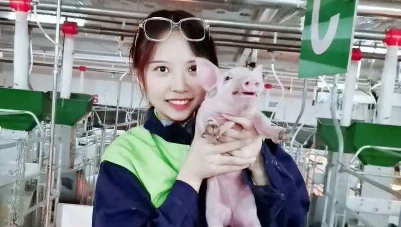 把猪当成自己的孩子来养!从一只仔猪的出生看现代养猪有多精细、多科学、多有爱