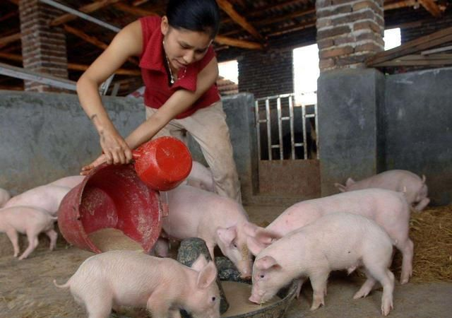 """都受骗了,""""双节""""猪肉不跌反涨,只因肉贩营销手段太高明!"""
