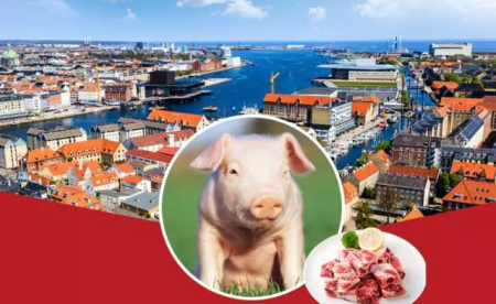 今年中国进口种猪四成从这来,对华出口猪肉超21万吨,这个国家有何养猪秘诀?