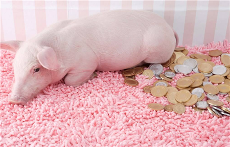 """""""猪中茅台""""3季度暴赚100亿,市值却缩水近1000亿,养猪行业没有护城河?"""